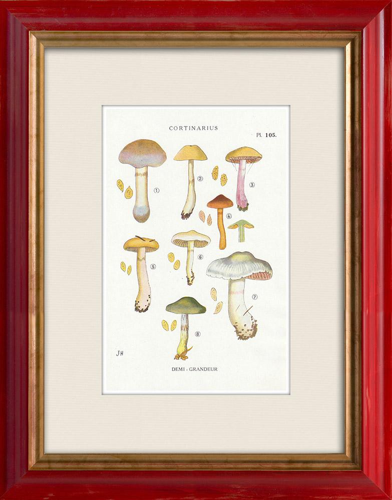 Antique Prints & Drawings   Mycology - Mushroom - Cortinarius Pl.105   Print   1919