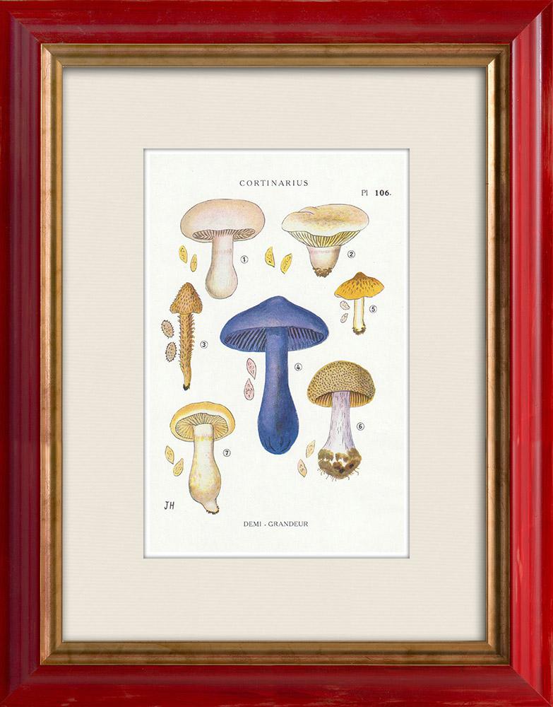 Gravures Anciennes & Dessins | Mycologie - Champignon - Cortinarius Pl.106 | Impression | 1919