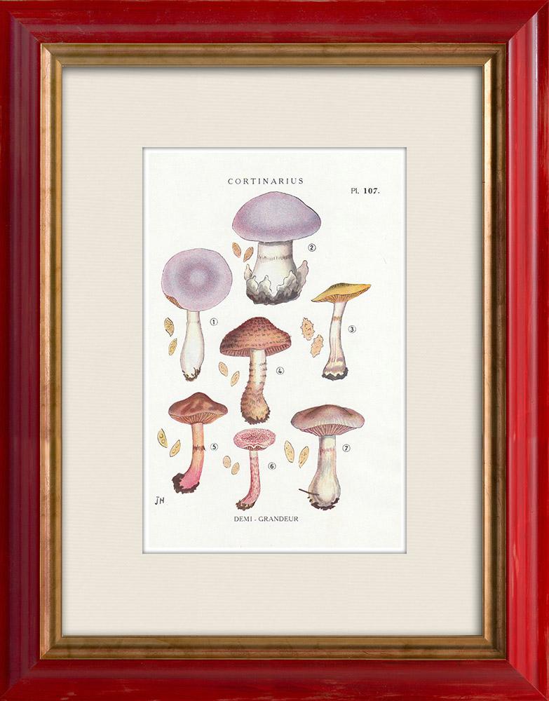 Antique Prints & Drawings   Mycology - Mushroom - Cortinarius Pl.107   Print   1919