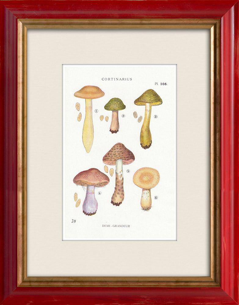 Gravures Anciennes & Dessins | Mycologie - Champignon - Cortinarius Pl.108 | Impression | 1919