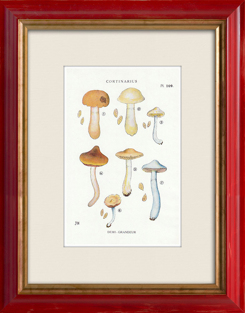 Antique Prints & Drawings | Mycology - Mushroom - Cortinarius Pl.109 | Print | 1919