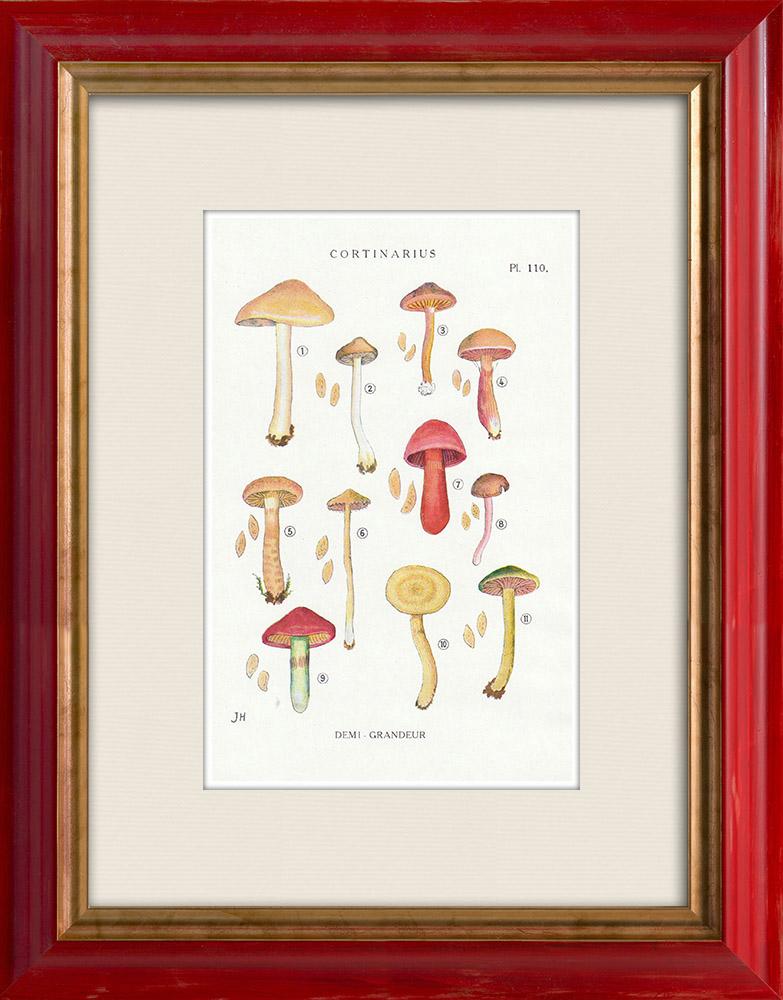 Antique Prints & Drawings | Mycology - Mushroom - Cortinarius Pl.110 | Print | 1919