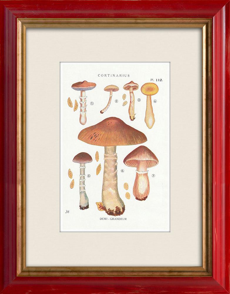 Antique Prints & Drawings | Mycology - Mushroom - Cortinarius Pl.112 | Print | 1919