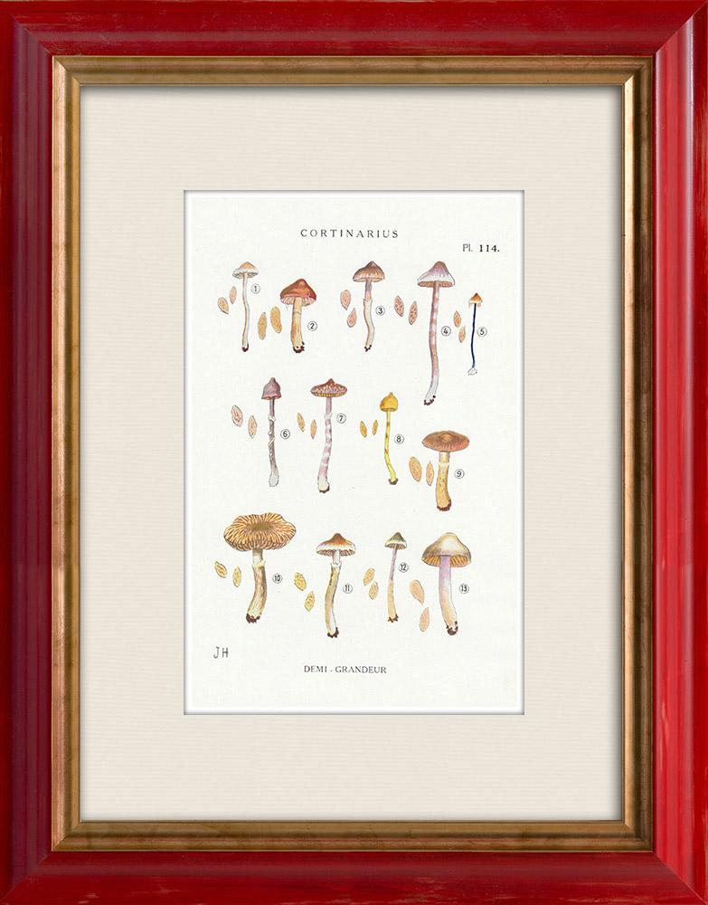 Gravures Anciennes & Dessins | Mycologie - Champignon - Cortinarius Pl.114 | Impression | 1919
