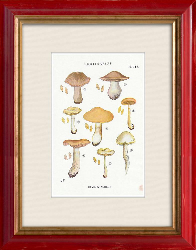 Gravures Anciennes & Dessins | Mycologie - Champignon - Cortinarius Pl.115 | Impression | 1919