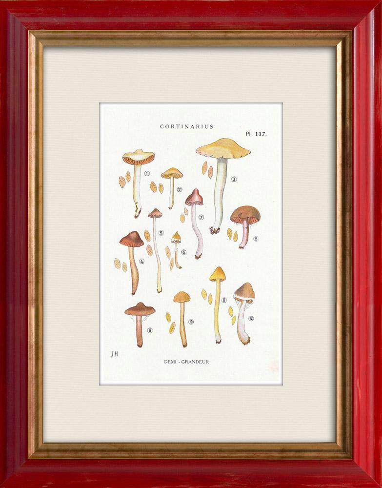 Antique Prints & Drawings | Mycology - Mushroom - Cortinarius Pl.117 | Print | 1919
