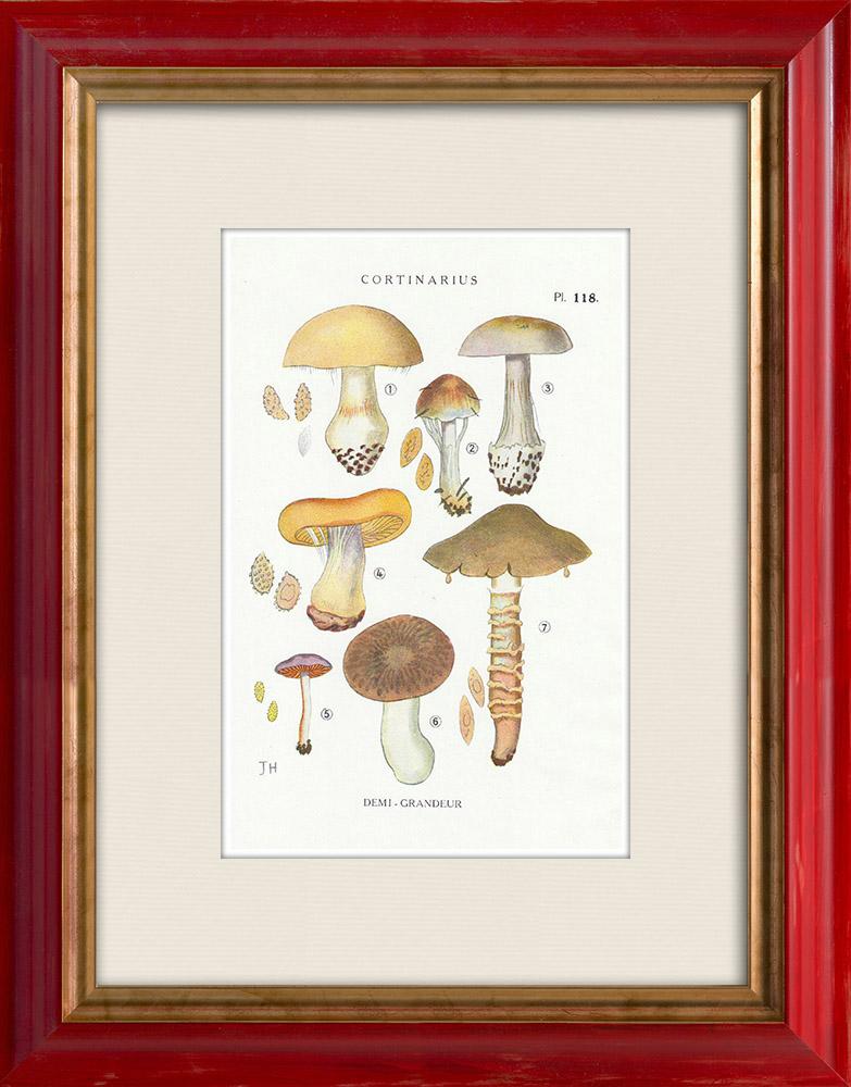 Antique Prints & Drawings   Mycology - Mushroom - Cortinarius Pl.118   Print   1919