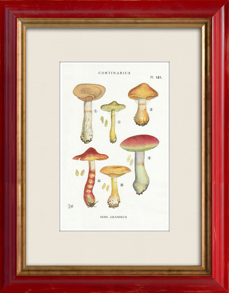Antique Prints & Drawings | Mycology - Mushroom - Cortinarius Pl.121 | Print | 1919
