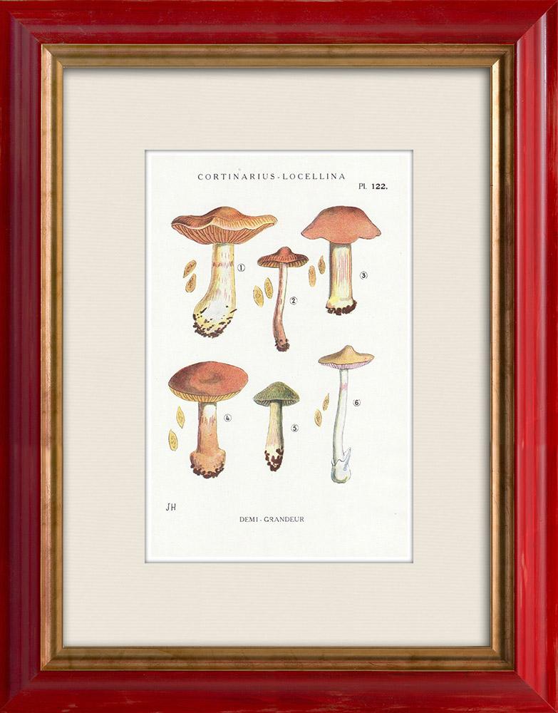 Antique Prints & Drawings | Mycology - Mushroom - Cortinarius - Locellina Pl.122 | Print | 1919