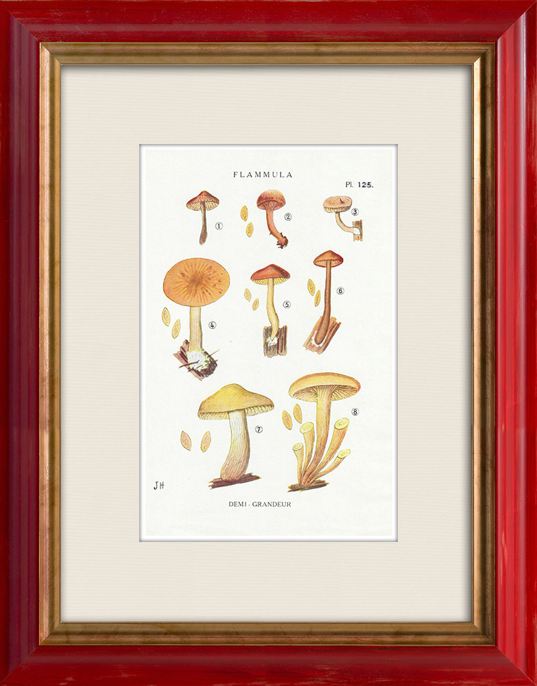 Gravures Anciennes & Dessins | Mycologie - Champignon - Flammula Pl.125 | Impression | 1919