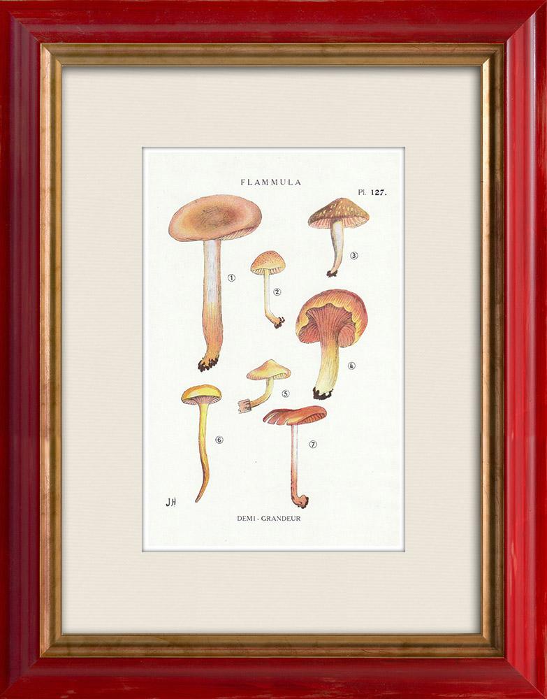 Antique Prints & Drawings | Mycology - Mushroom - Flammula Pl.127 | Print | 1919