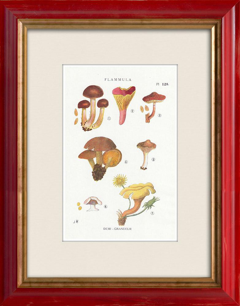 Gravures Anciennes & Dessins | Mycologie - Champignon - Flammula Pl.128 | Impression | 1919