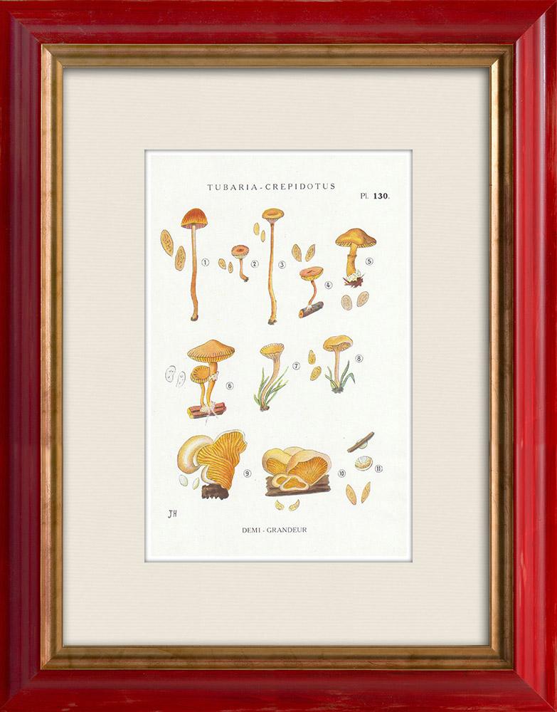 Gravures Anciennes & Dessins | Mycologie - Champignon - Tubaria - Crepidotus Pl.130 | Impression | 1919