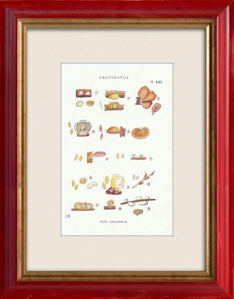Gravures Anciennes & Dessins | Mycologie - Champignon - Crepidotus Pl.131 | Impression | 1919