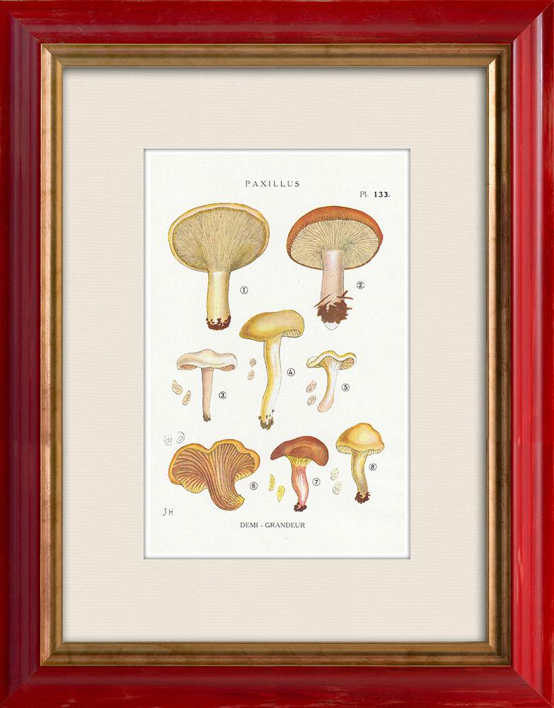 Antique Prints & Drawings | Mycology - Mushroom - Paxillus Pl.133 | Print | 1919