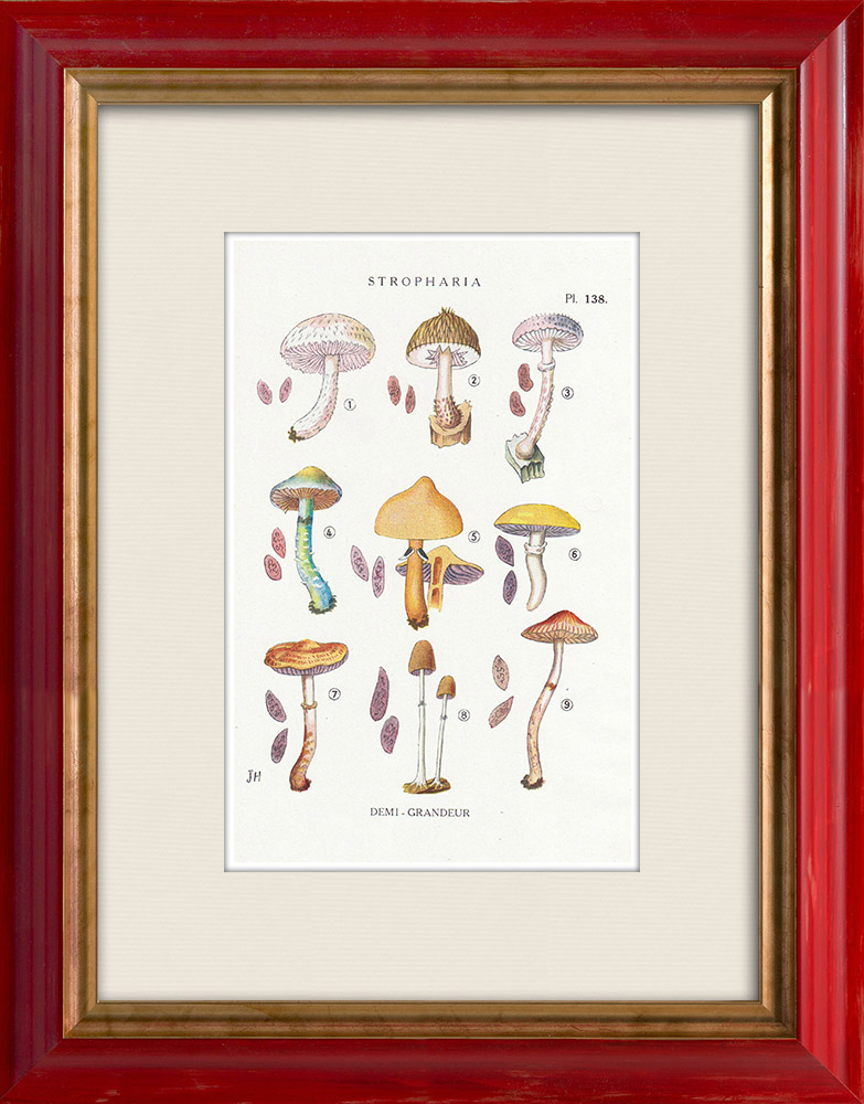 Antique Prints & Drawings | Mycology - Mushroom - Stropharia Pl.138 | Print | 1919
