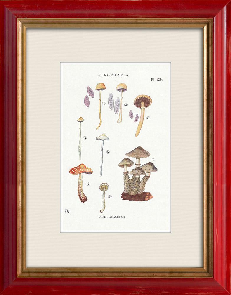 Gravures Anciennes & Dessins | Mycologie - Champignon - Stropharia Pl.139 | Impression | 1919
