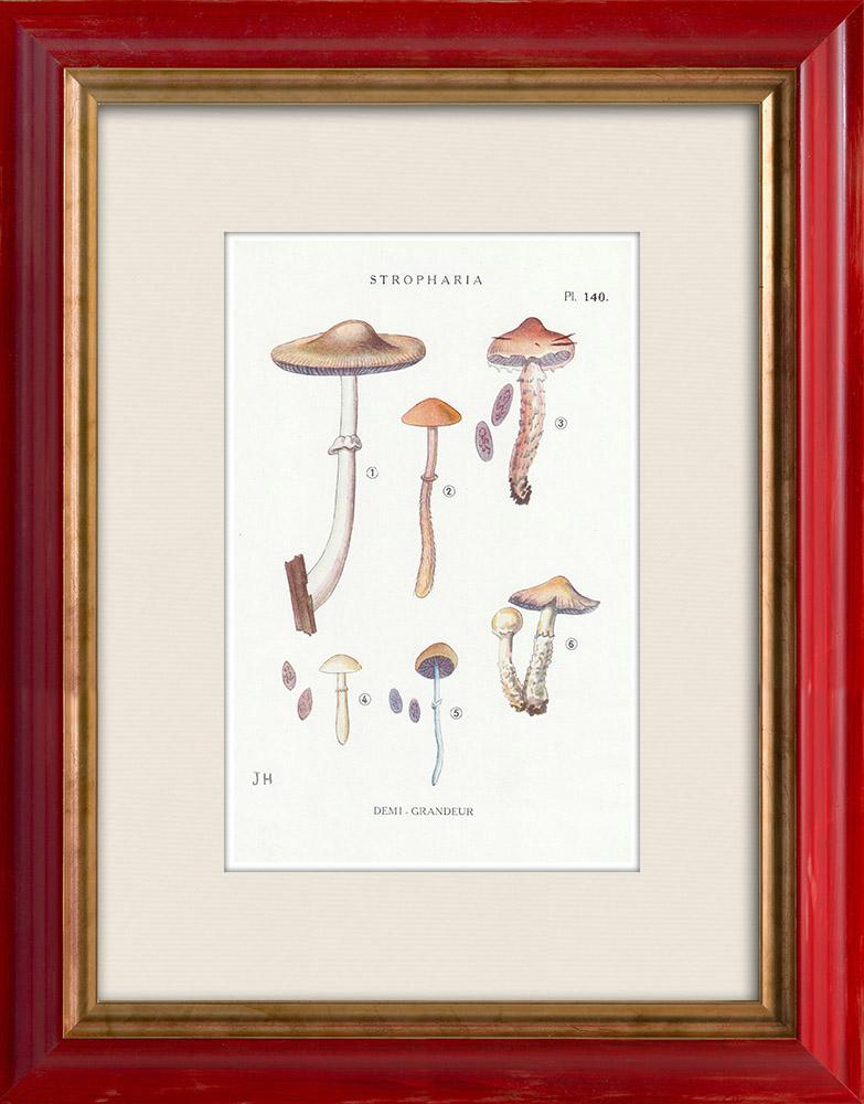 Antique Prints & Drawings | Mycology - Mushroom - Stropharia Pl.140 | Print | 1919
