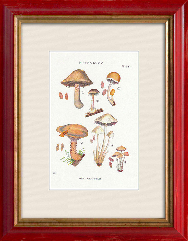 Antique Prints & Drawings | Mycology - Mushroom - Hypholoma Pl.141 | Print | 1919