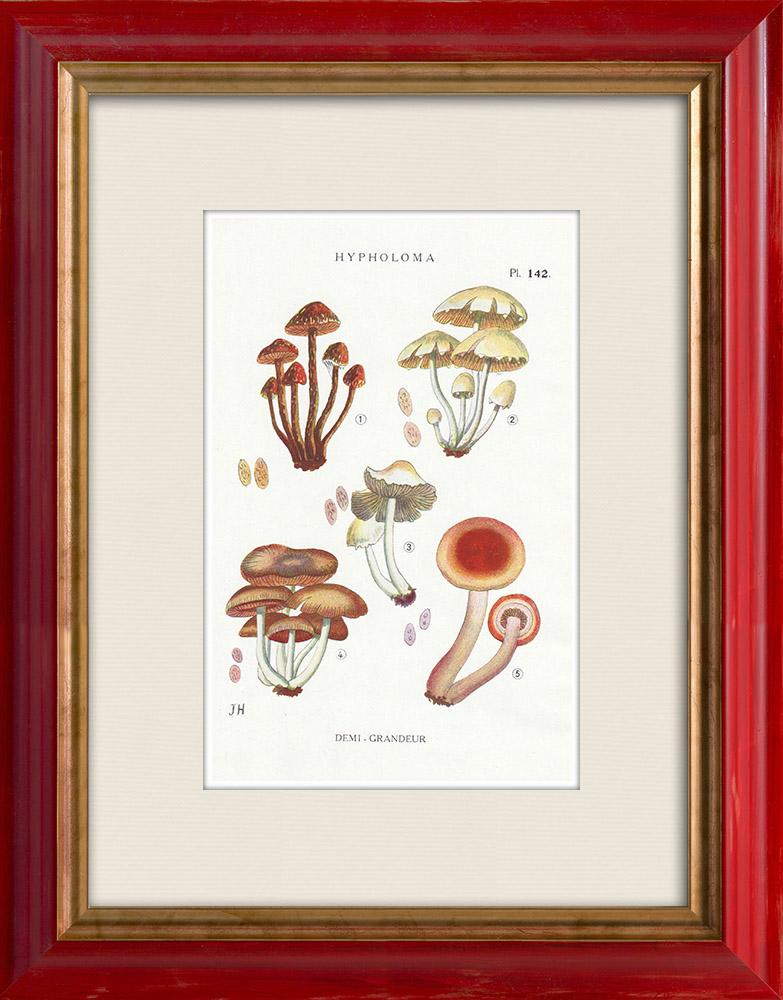 Gravures Anciennes & Dessins   Mycologie - Champignon - Hypholoma Pl.142   Impression   1919