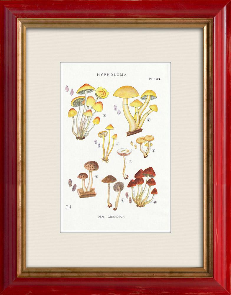 Antique Prints & Drawings   Mycology - Mushroom - Hypholoma Pl.143   Print   1919