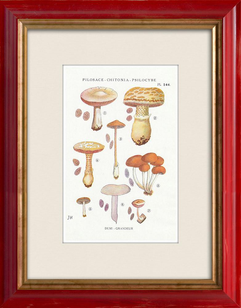 Gravures Anciennes & Dessins | Mycologie - Champignon - Pilosace - Chitonia - Psilocybe Pl.144 | Impression | 1919