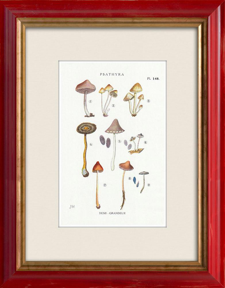 Antique Prints & Drawings | Mycology - Mushroom - Psathyra Pl.148 | Print | 1919
