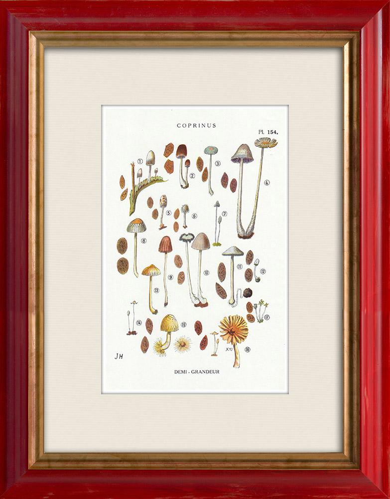 Antique Prints & Drawings | Mycology - Mushroom - Coprinus Pl.154 | Print | 1919