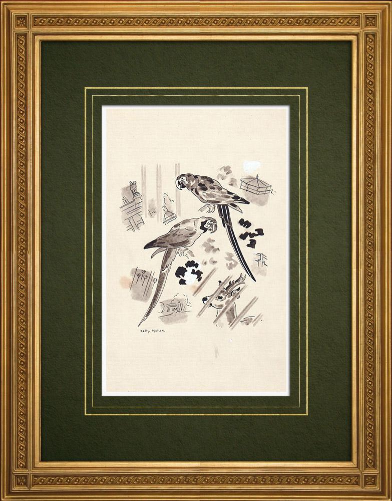 Grabados & Dibujos Antiguos | Zoológico de Amberes - Aras - Bélgica (Ketty Muller) | Dibujo | 1947