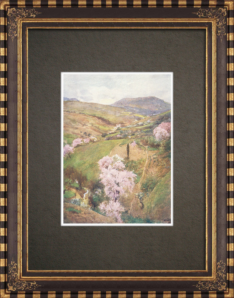 Antique Prints & Drawings | Girgenti Valley in the spring - Sicily (Italy) | Print | 1911