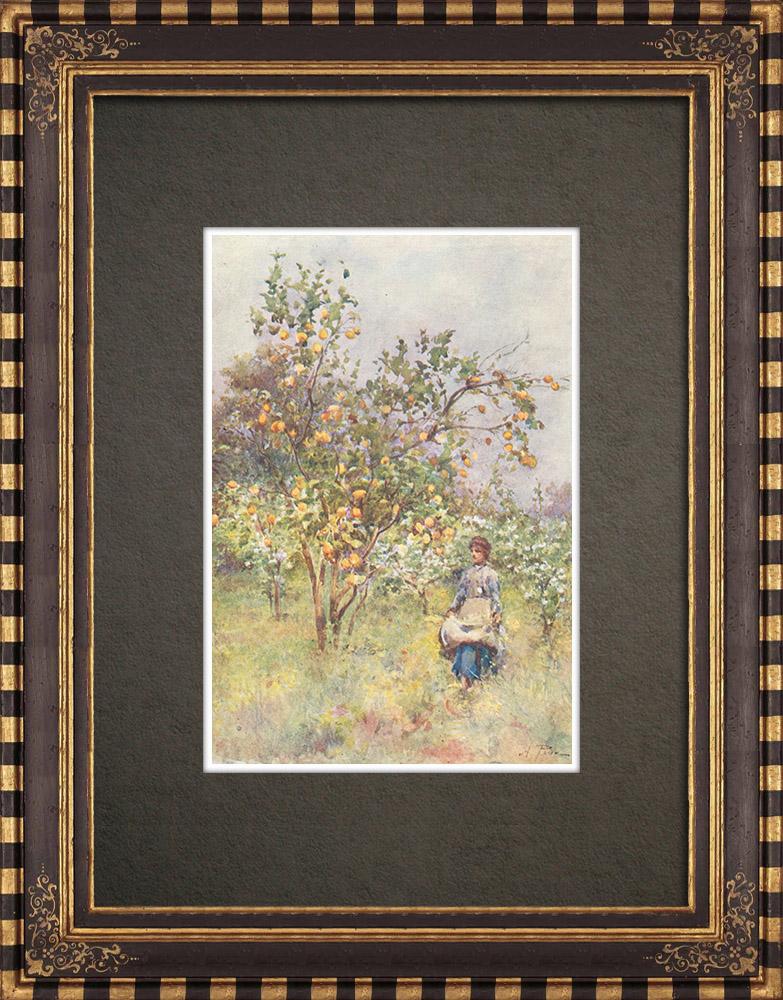 Gravures Anciennes & Dessins   Les citronniers au printemps - Sicile (Italie)   Impression   1911
