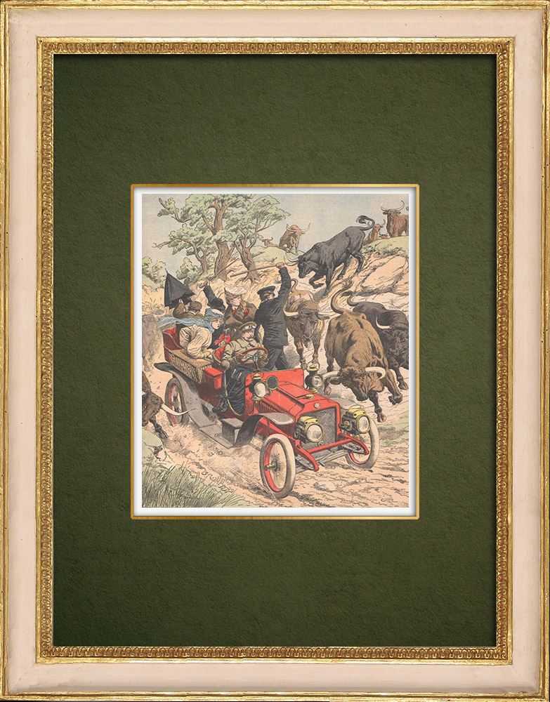 Antique Prints & Drawings | An automobile chased by bulls - Spain - 1905 | Wood engraving | 1905