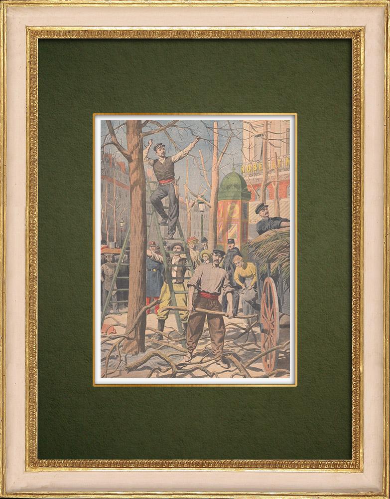 Antique Prints & Drawings | Pruning of trees in Paris - 1907 | Wood engraving | 1907
