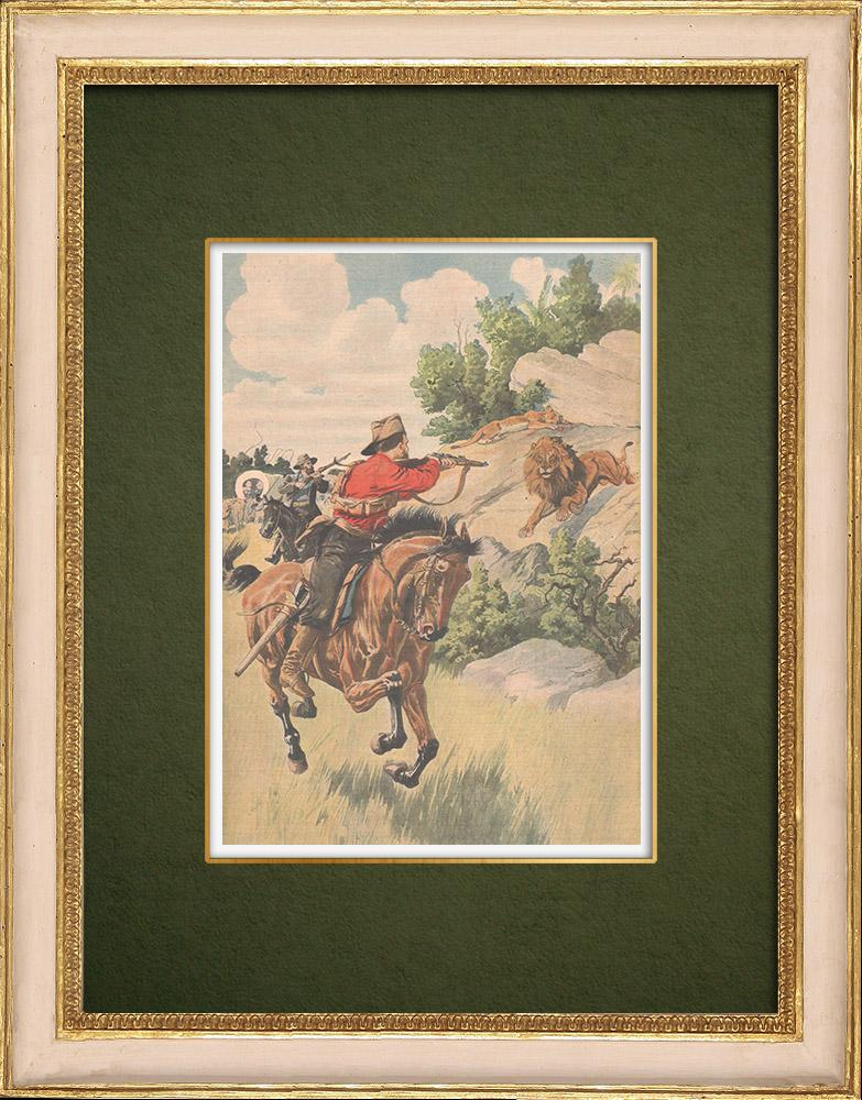 Gravures Anciennes & Dessins | Chasse aux lions au Transvaal - Afrique  du Sud - 1907 | Gravure sur bois | 1907