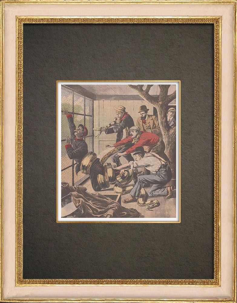 Stampe Antiche & Disegni | Un boa attacca una guardia allo zoo di New York - Stati Uniti d'America - 1908 | Incisione xilografica | 1908