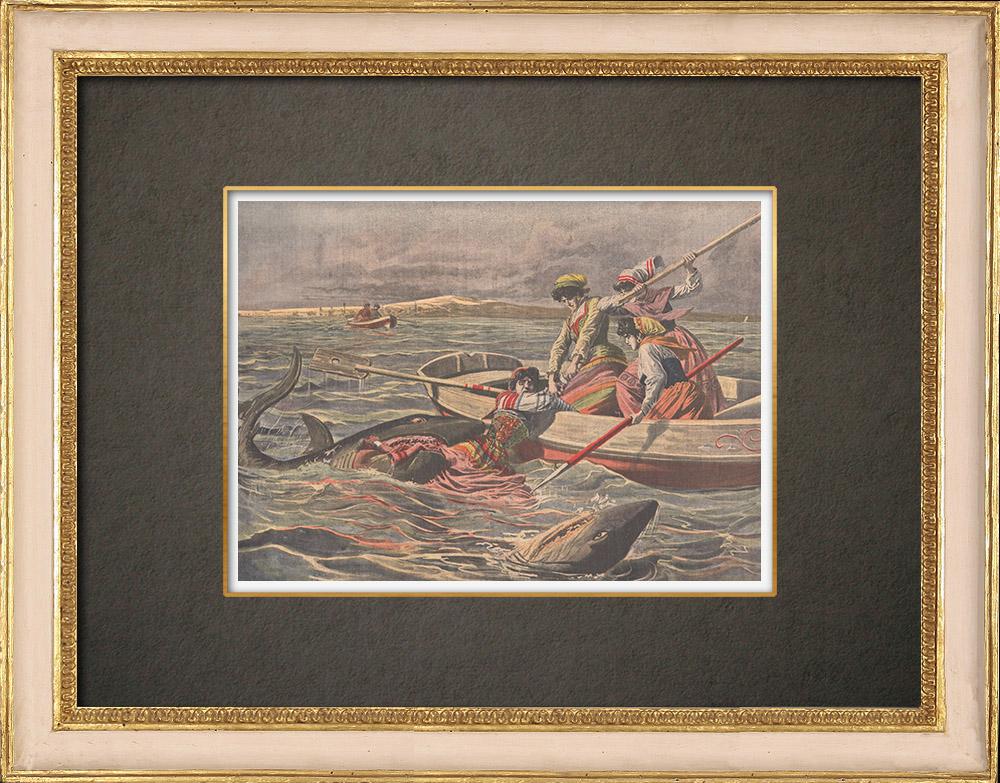 Stampe Antiche & Disegni | Attacco di squali nell'Adriatico - Isole Meleda - Croazia - 1908 | Incisione xilografica | 1908