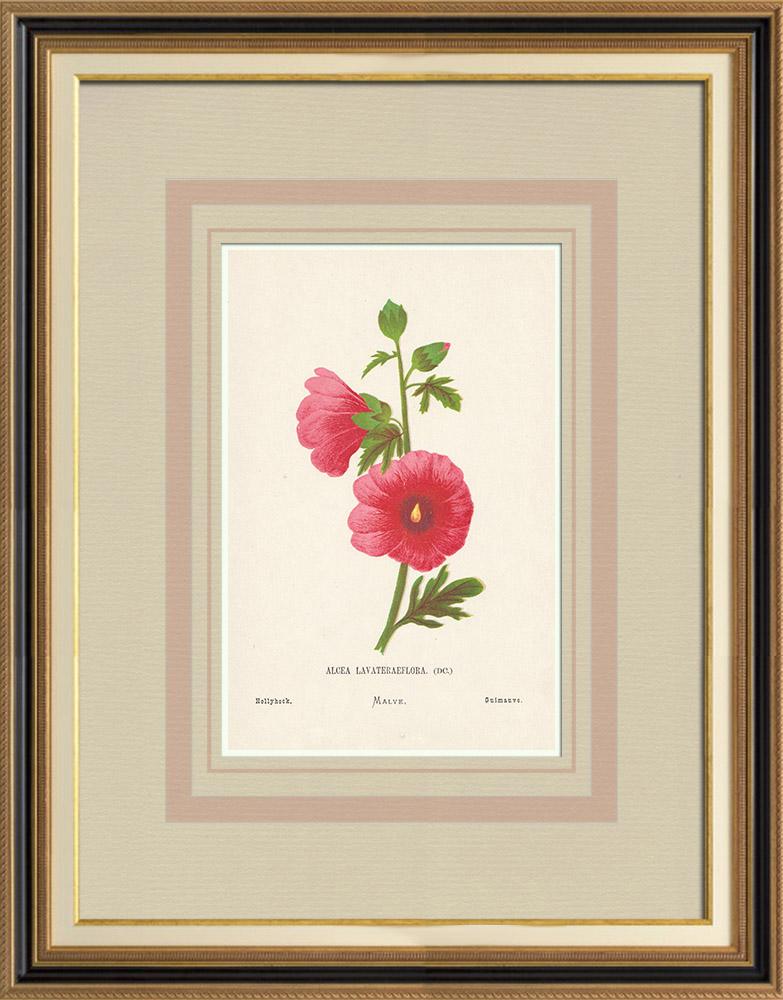 Stampe Antiche & Disegni | Fiori di Palestina - Alcea Lavateraeflora | Cromolitografia | 1876