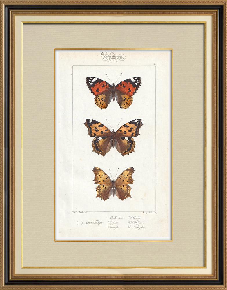 Stampe Antiche & Disegni   Farfalle dall'Europa - Belle Dame - Triangle - V. Blanc   Stampa calcografica   1834