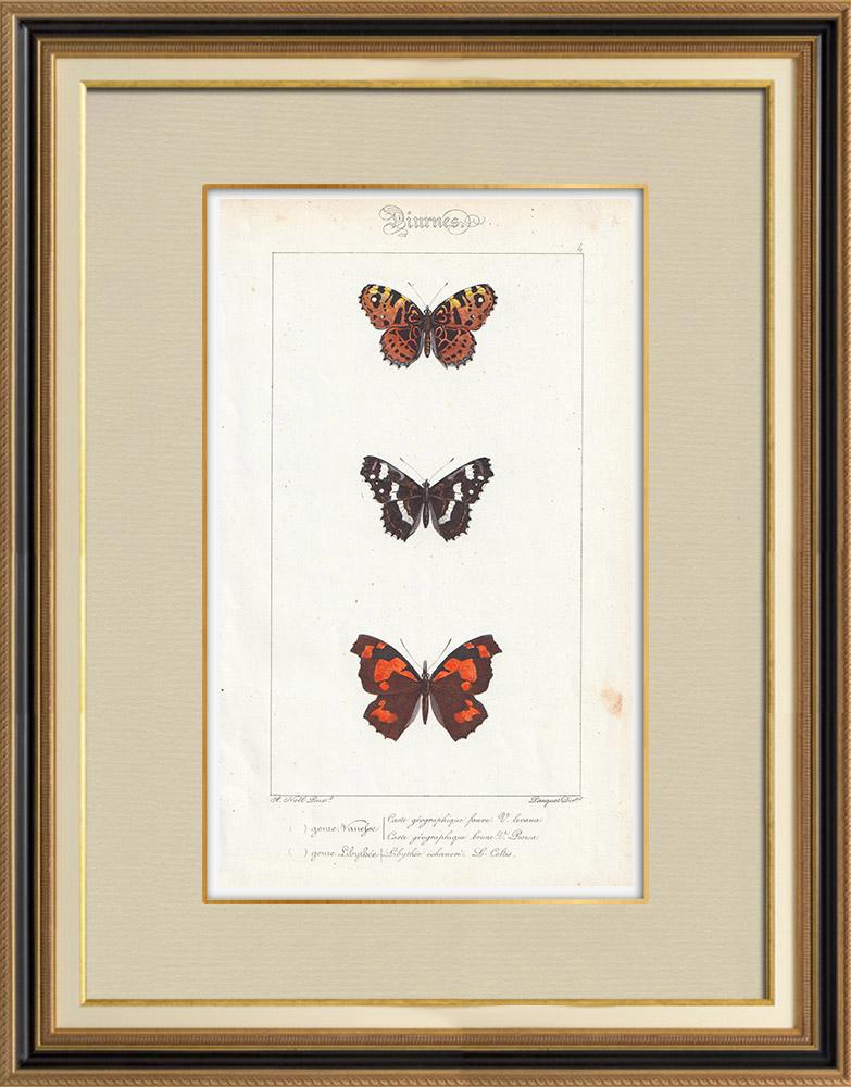 Stampe Antiche & Disegni | Farfalle dall'Europa - Carte Géographique Fauve - Carte Géographique Brune - Libythée échancré | Stampa calcografica | 1834