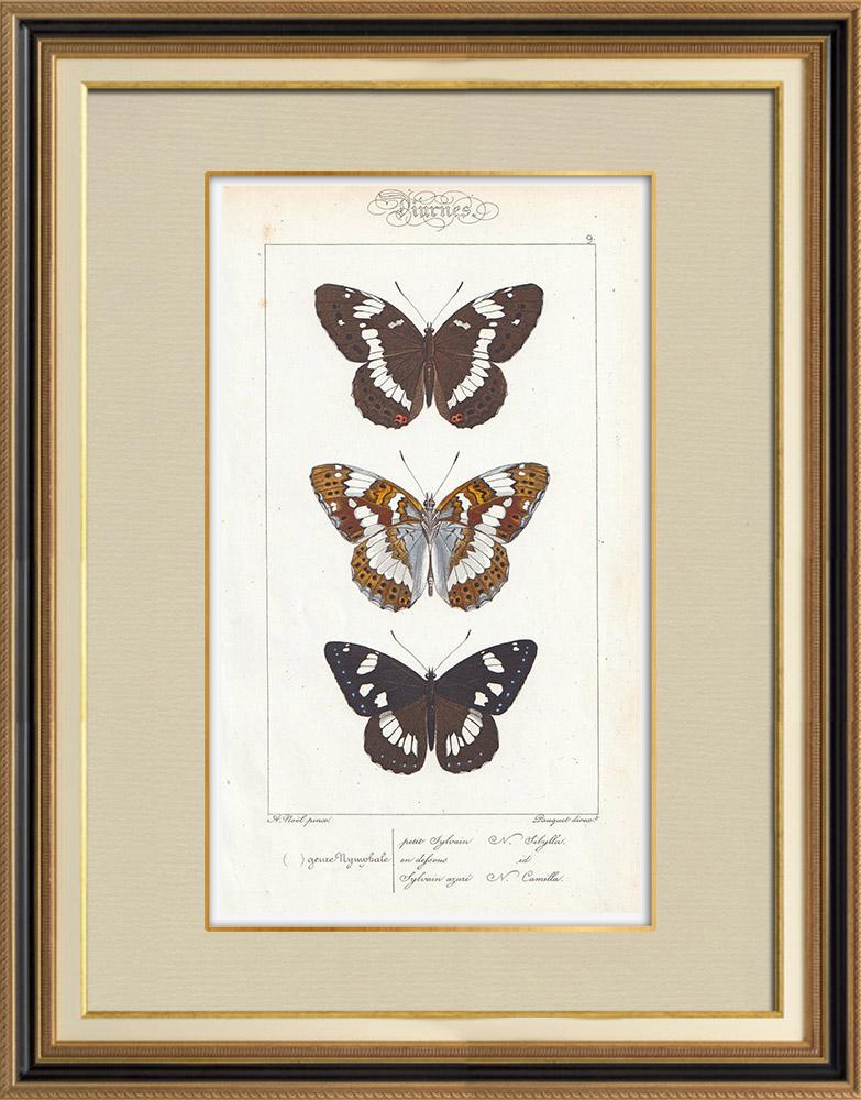 Antique Prints & Drawings | Butterflies of Europe - Petit Vulcain - Sylvain Azuré | Intaglio print | 1834