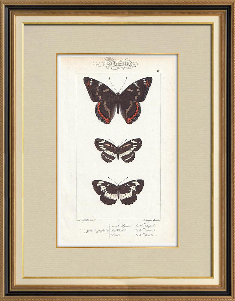 Stampe Antiche & Disegni   Farfalle dall'Europa - Grand Sylvain - Lucille   Stampa calcografica   1834