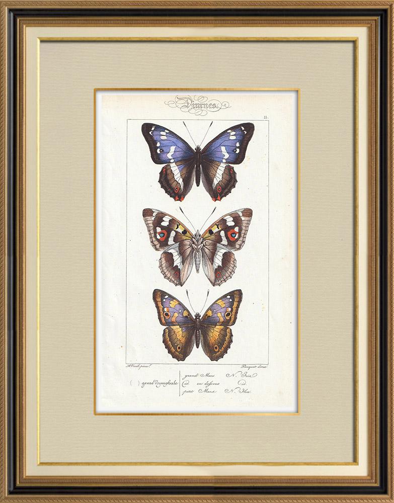 Grabados & Dibujos Antiguos | Mariposas Europeas - Grand Mars - Petit Mars | Grabado en talla dulce | 1834