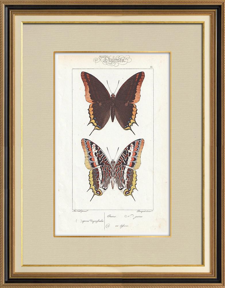 Stampe Antiche & Disegni | Farfalle dall'Europa - Jasius | Stampa calcografica | 1834