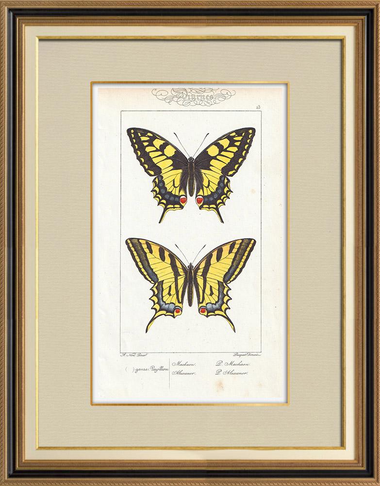 Stampe Antiche & Disegni | Farfalle dall'Europa - Machaon - Alexanor | Stampa calcografica | 1834