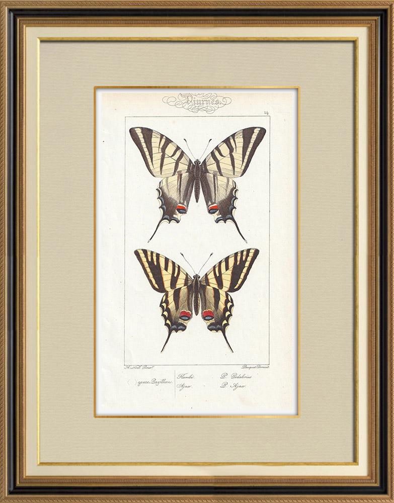 Antique Prints & Drawings | Butterflies of Europe - Flambé - Ajax | Intaglio print | 1834
