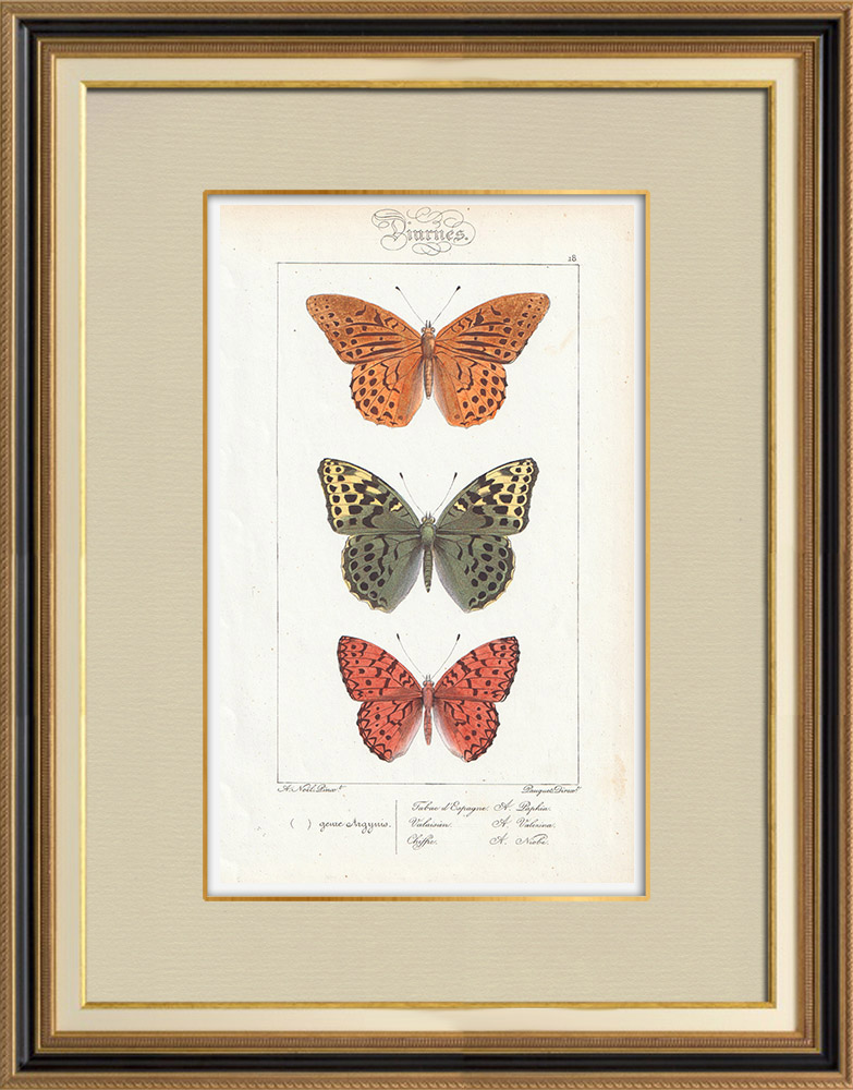 Antique Prints & Drawings | Butterflies of Europe - Tabac d'Espagne - Valaisien - Chiffre | Intaglio print | 1834