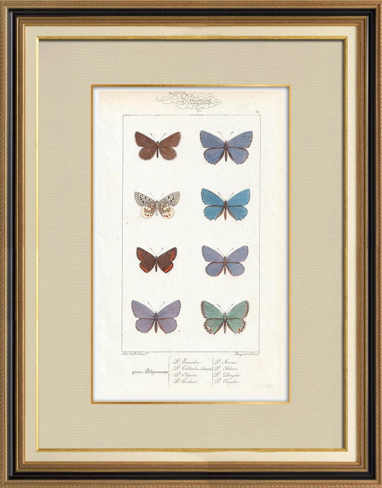 Stampe Antiche & Disegni | Farfalle dall'Europa - Polyommate Eumedon | Stampa calcografica | 1834