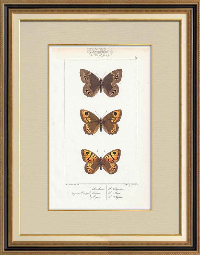 Stampe Antiche & Disegni | Farfalle dall'Europa - Satyre Bacchante | Stampa calcografica | 1834