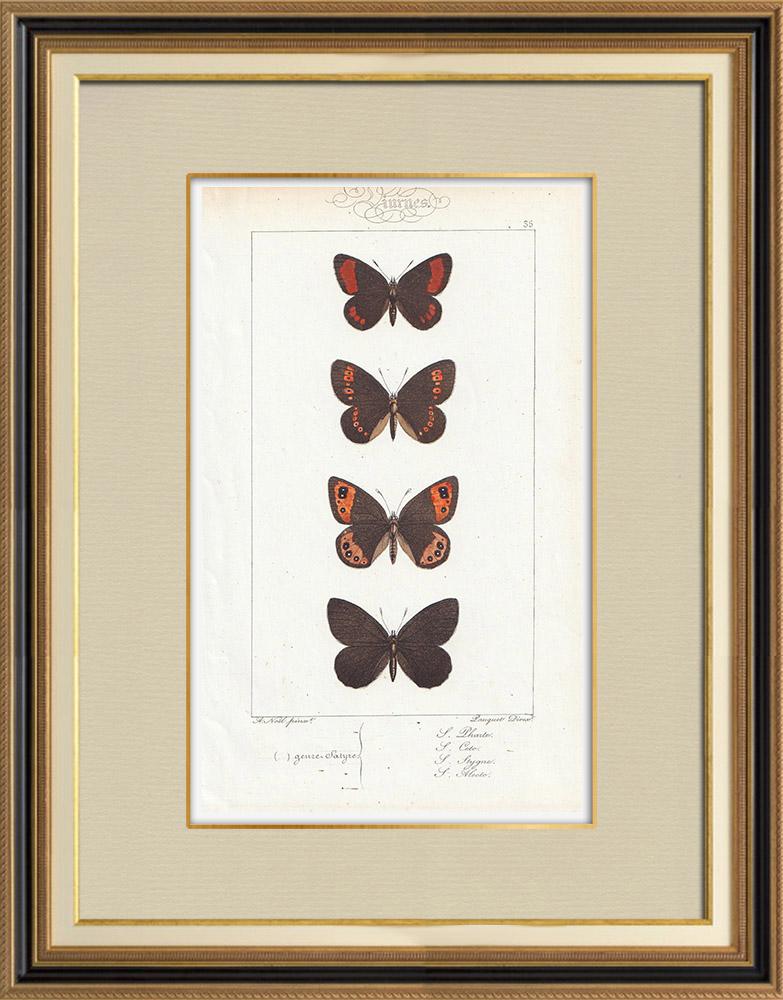 Stampe Antiche & Disegni | Farfalle dall'Europa - Satyre Pharte | Stampa calcografica | 1834