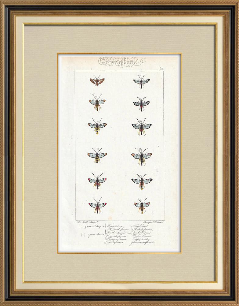 Stampe Antiche & Disegni | Farfalle dall'Europa - Thyris - Sesie | Stampa calcografica | 1834